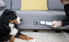 How to Remove Dog Hair from a Couch: Solution for Every Material