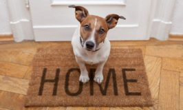 Four Solid Reasons to Adopt an Older Dog