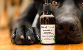 Things to Know About CBD Oil for Pets