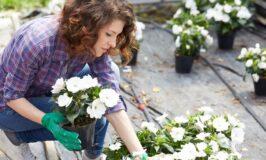 4 Tips for Upgrading Your Garden