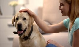 8 Ways to Keep Your Old Dog Happy and Healthy